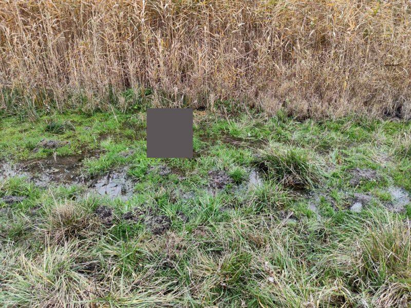 На Николаевщине в камышах нашли мертвого мужчину (ФОТО)