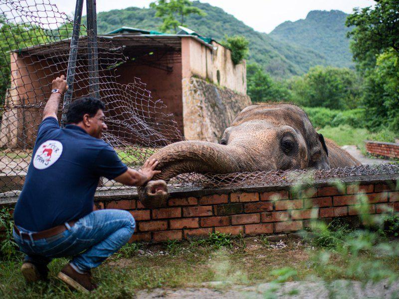 Певица Шер помогла освободить «самого одинокого слона» (ВИДЕО)