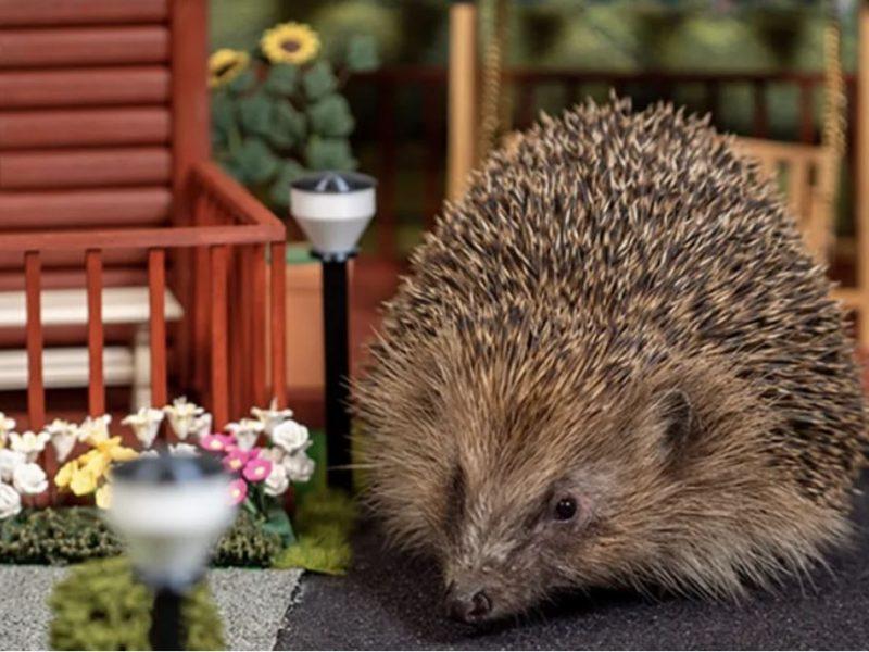 В Великобритании построили парк для ежей, чтобы спасти их от вымирания (ФОТО, ВИДЕО)