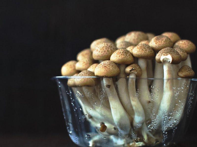 В Николаевской области с начала сентября трое людей отравились грибами