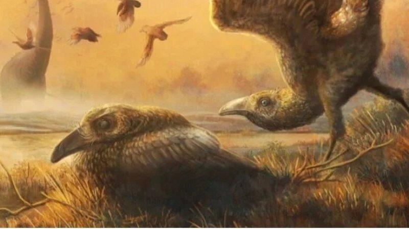 Зубастая. На Мадагаскаре нашли череп удивительной птицы времен динозавров