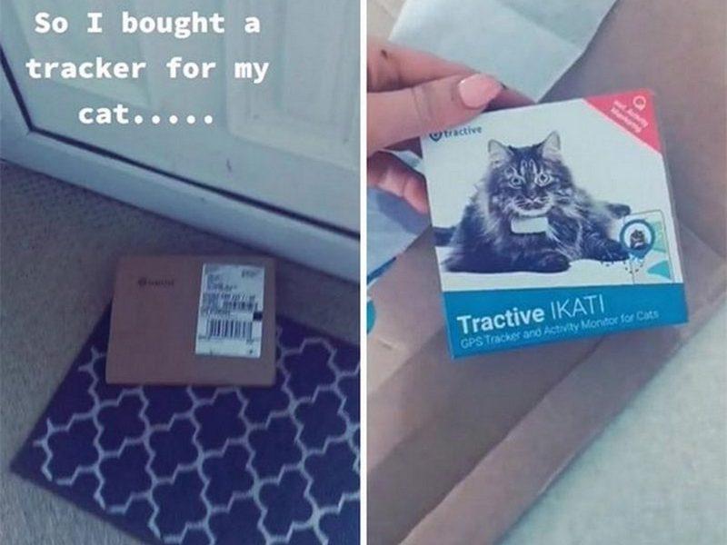Жила на пять семей: женщина узнала неприглядную правду о своей кошке благодаря трек-ошейнику