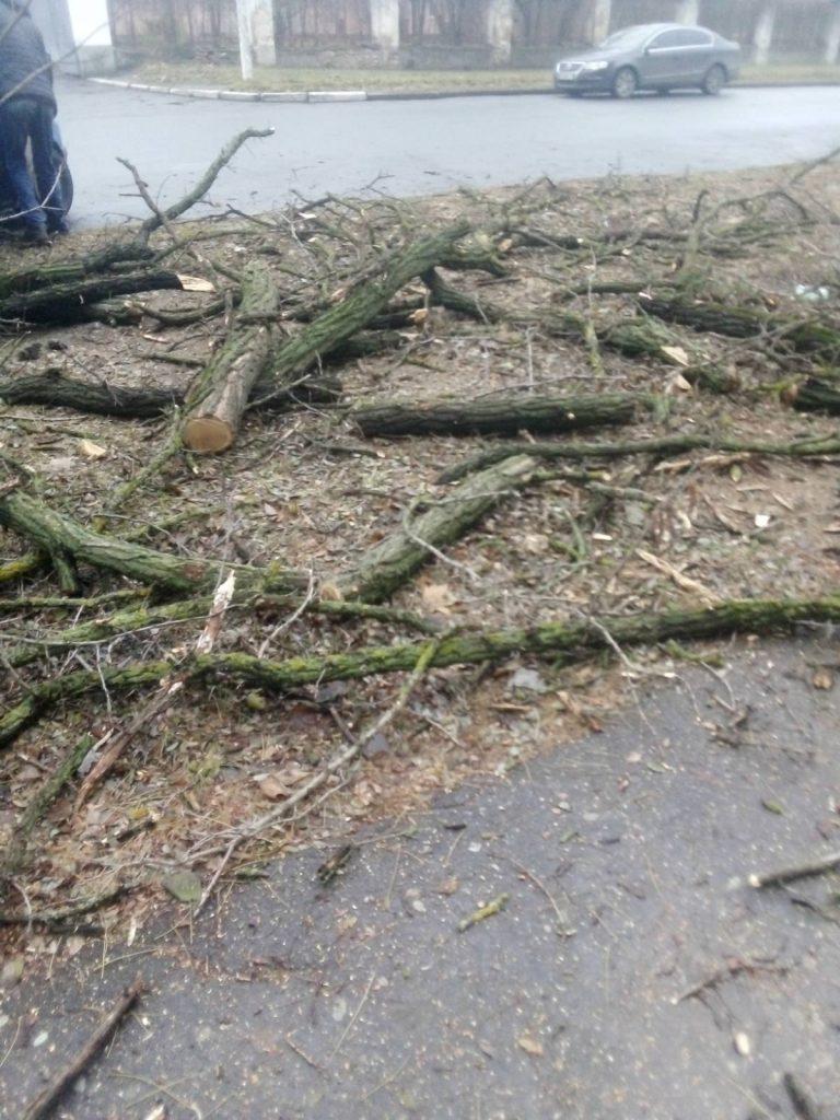4 под корень, еще 13 сильно обрезаны: на ул.Киевской в Николаеве попилили деревья (ФОТО) 3