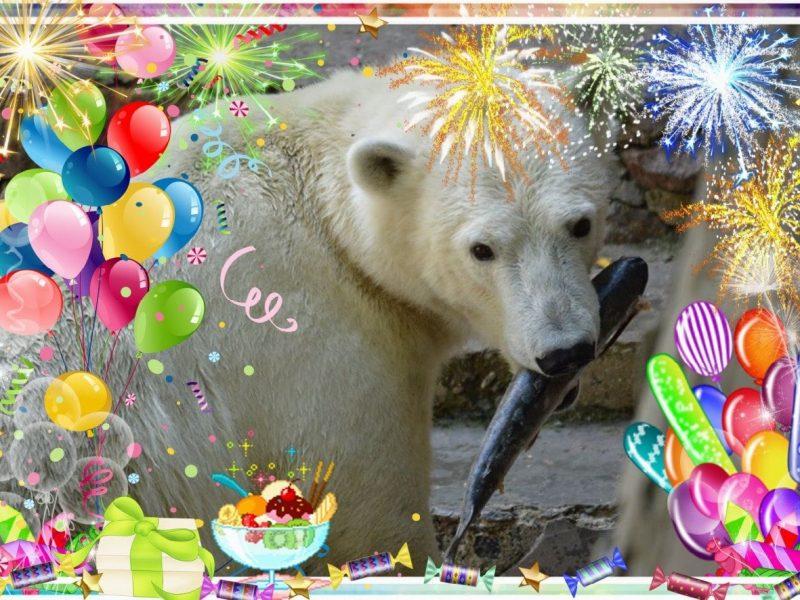 Рожденной в Николаевском зоопарке белой медведице Сметанке сегодня – три года (ФОТО)