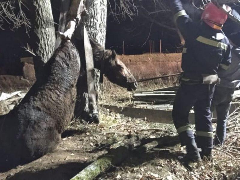 Невнимательный Орлик: на Николаевщине поздним вечером спасатели достали коня из колодца (ФОТО)