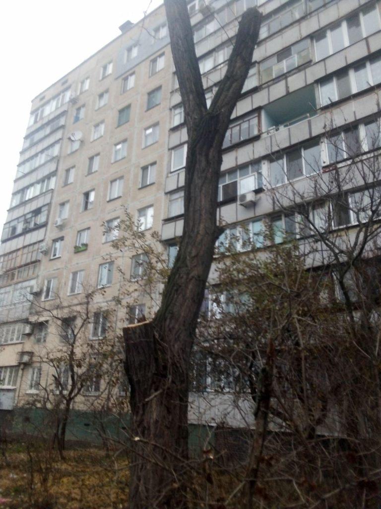 4 под корень, еще 13 сильно обрезаны: на ул.Киевской в Николаеве попилили деревья (ФОТО) 1