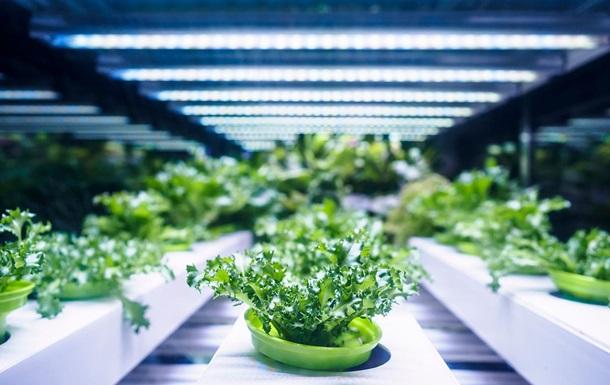 Крупнейшая в Европе вертикальная ферма открылась возле Копенгагена (ФОТО)