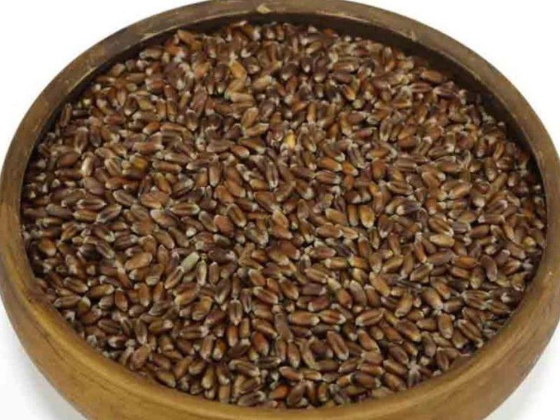 Хлебная мода. В Украине будут выращивать черную и синюю пшеницу — ее создали одесские селекционеры