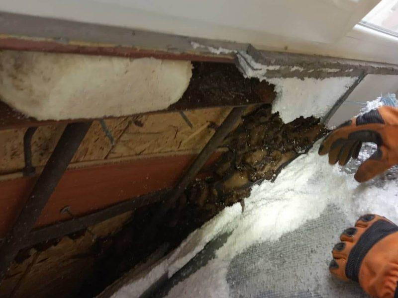 Жуть. На балконе жилого дома в Днепре обнаружили колонию летучих мышей – 500 штук (ФОТО, ВИДЕО)
