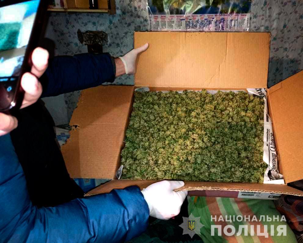 """""""Для себя"""". В Николаеве изъяли каннабиса на 200 тыс.грн. (ФОТО, ВИДЕО) 1"""