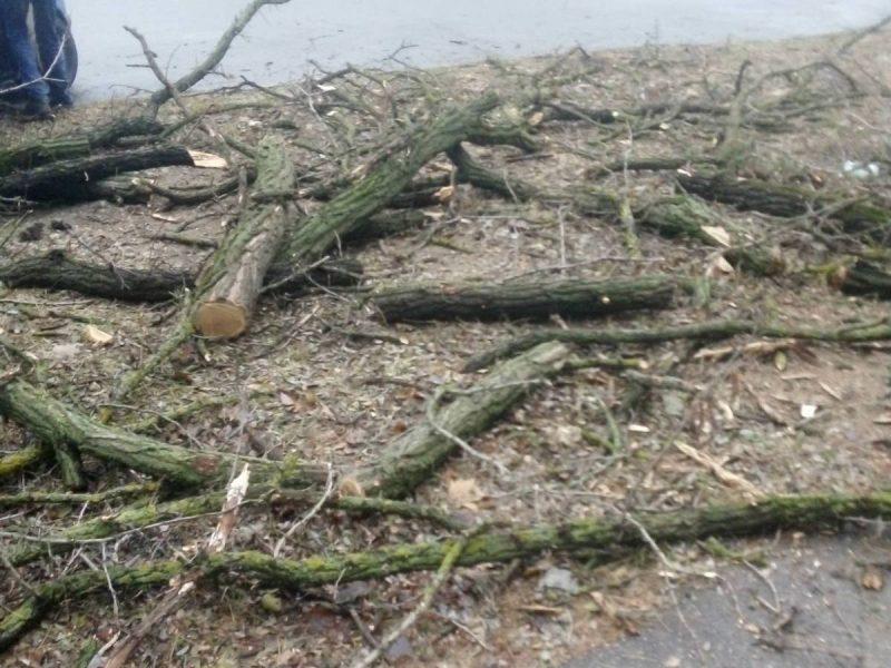 4 под корень, еще 13 сильно обрезаны: на ул.Киевской в Николаеве попилили деревья (ФОТО)