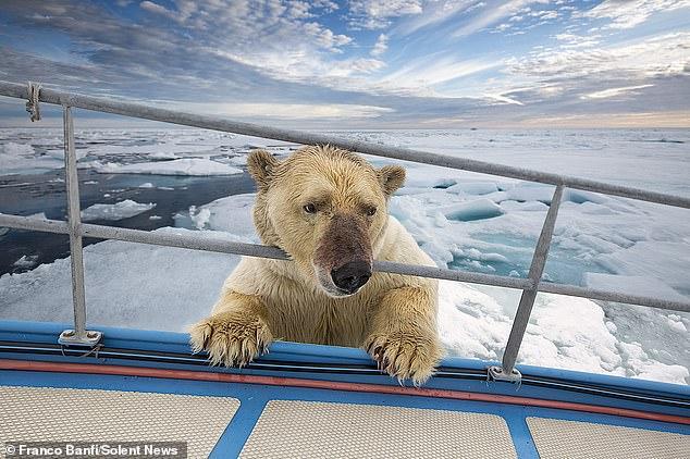 Удивительная встреча яхтсменки с белым медведем, запечатленная фотографом дикой природы (ФОТО) 3
