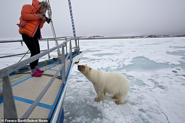 Удивительная встреча яхтсменки с белым медведем, запечатленная фотографом дикой природы (ФОТО) 1