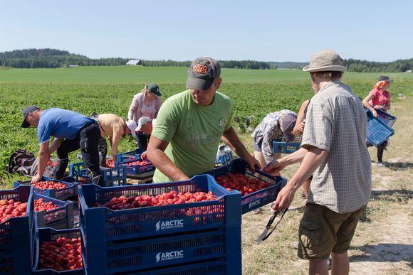 Первые украинские сезонные работники прилетят в Финляндию уже в марте