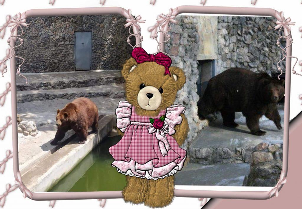В Николаевском зоопарке именинники – камчатские медведи Мирон и Вакула (ФОТО) 1