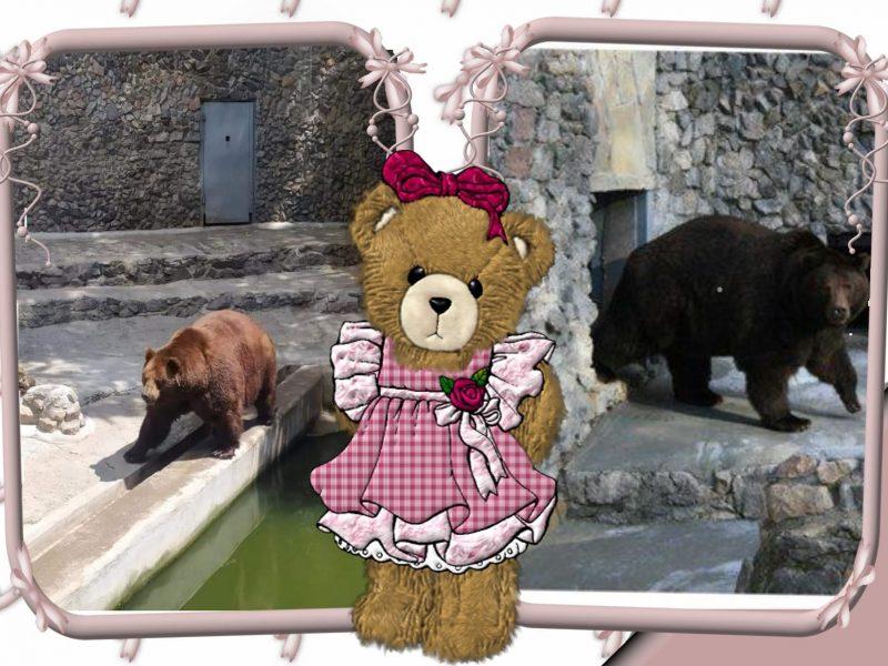 В Николаевском зоопарке именинники – камчатские медведи Мирон и Вакула (ФОТО)