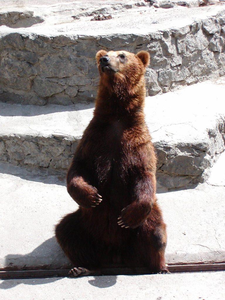 В Николаевском зоопарке именинники – камчатские медведи Мирон и Вакула (ФОТО) 19