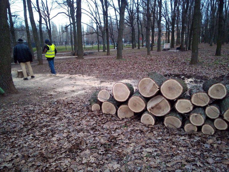 В Николаеве очередное варварство – вырубили молодые дубы возле 20-й школы (ФОТО)