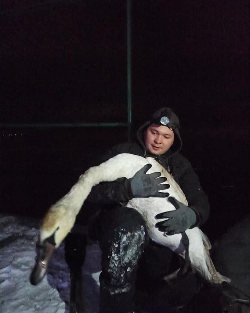 На Николаевщине спасли вмерзшего в лед лебедя 5