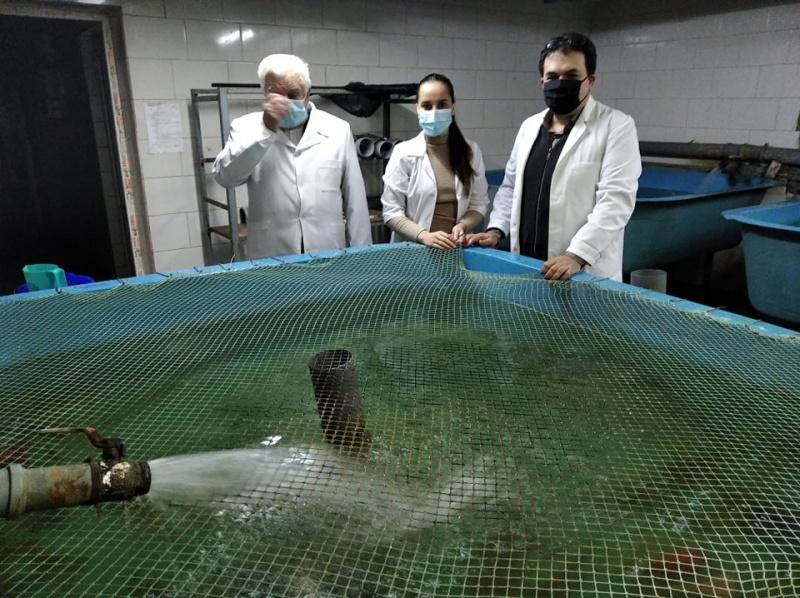 В Черновцах ученые спасают от вымирания краснокнижных местных рыб - стерлядь, марену, вырезуба (ФОТО) 9
