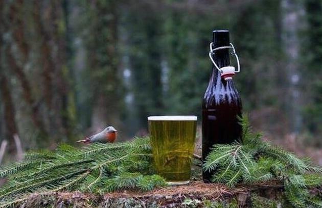 В утиль. В Нидерландах из новогодних елок варят пиво