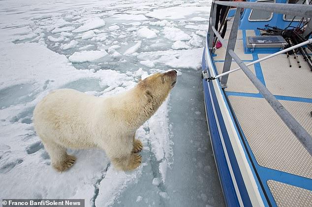 Удивительная встреча яхтсменки с белым медведем, запечатленная фотографом дикой природы (ФОТО) 5