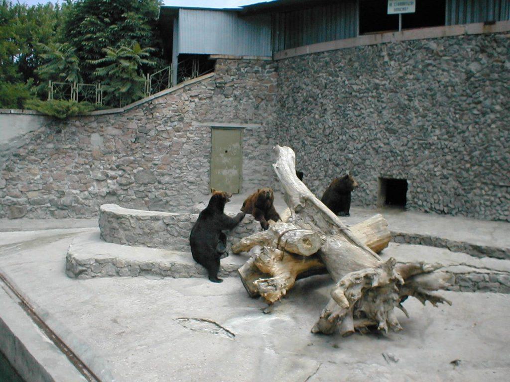 В Николаевском зоопарке именинники – камчатские медведи Мирон и Вакула (ФОТО) 5