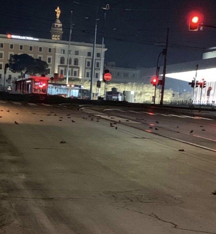 Рим засыпало сотнями мертвых скворцов – птицы погибли из-за новогодних фейерверков (ФОТО, ВИДЕО) 1