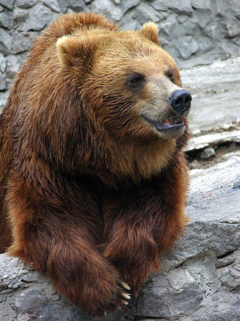В Николаевском зоопарке именинники – камчатские медведи Мирон и Вакула (ФОТО) 9