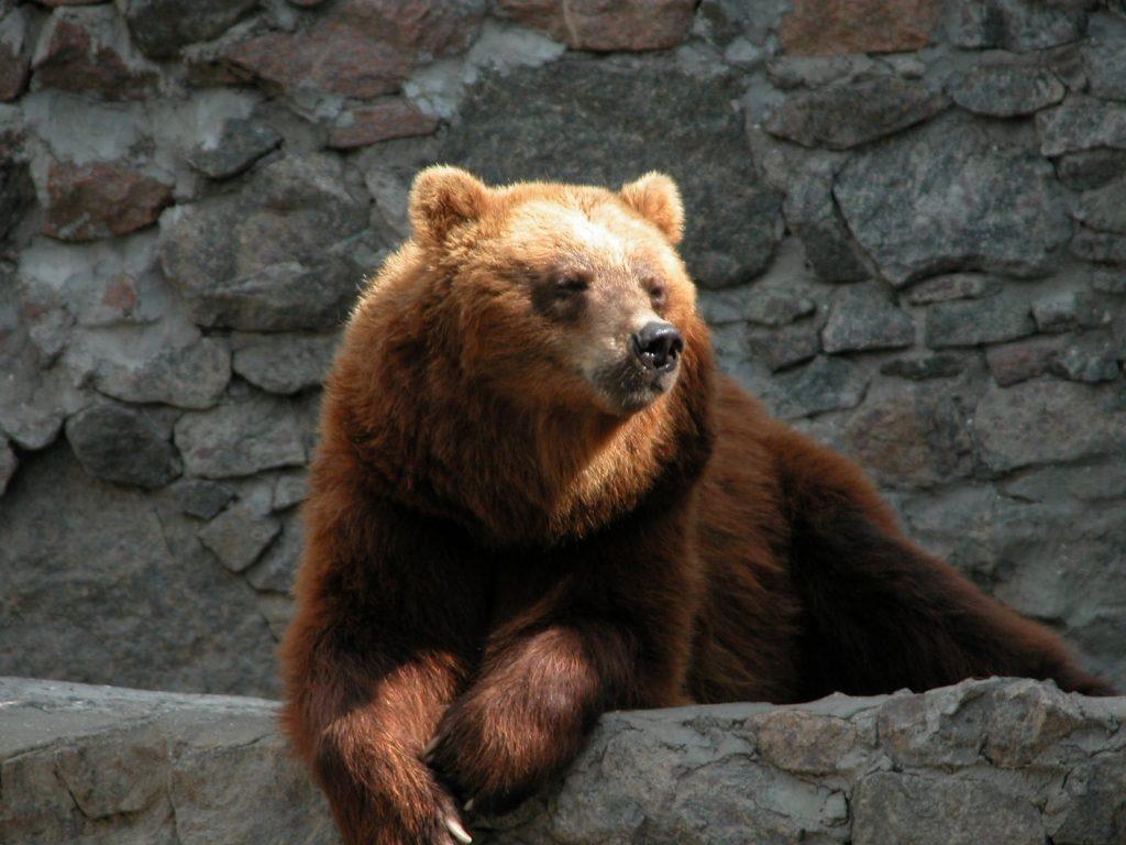 В Николаевском зоопарке именинники – камчатские медведи Мирон и Вакула (ФОТО) 15