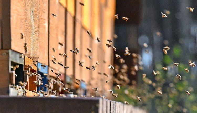 Беда. На юге Украины проснулись пчелы, а впереди холода (ВИДЕО)