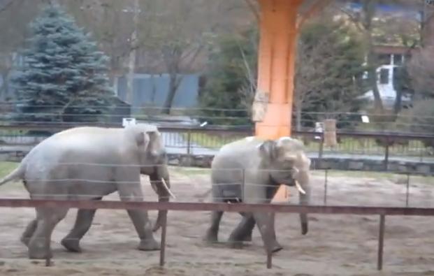 Потеплело: в Николаевском зоопарке слоны резвятся на свежем воздухе (ВИДЕО)