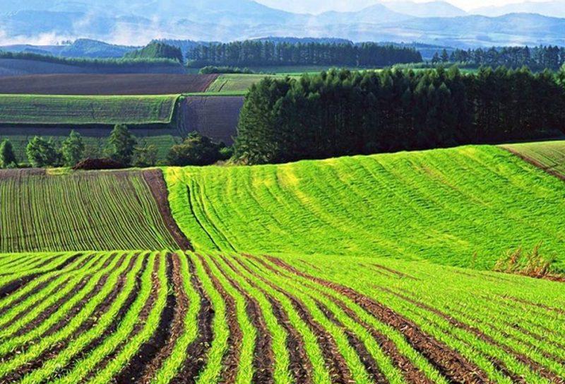 В Николаевской области за год в 1,5 раза увеличилось количество фактов самозахвата земли
