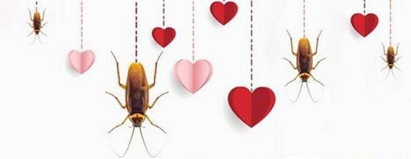 Назови таракана именем бывшего (ей) и скорми его жабе: акция от Николаевского зоопарка ко Дню святого Валентина