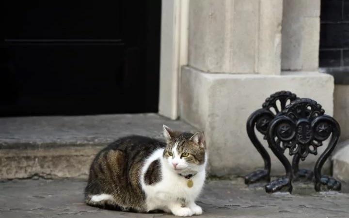Из ненашей жизни: кот Ларри отметил 10-летие работы на посту главного мышелова в резиденции премьер-министра Великобритании (ВИДЕО)