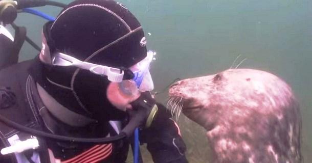 «Только раз бывает в жизни встреча»: как дайвер тюленям животики чесал (ФОТО)