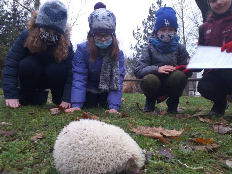 В Николаевском зоопарке отметили День ежика (ФОТО)