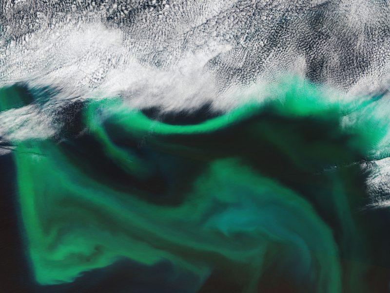 Спутник ESA показал цветение Тихого океана, ученые предупреждают об опасности (ФОТО, ВИДЕО)