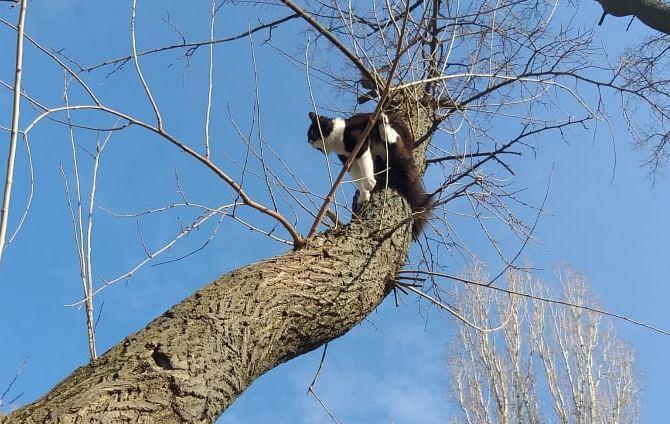 Айболитов день. В Николаеве спасатели 2 собак вытащили из колодца, одну из реки и сняли кота с дерева (ФОТО)
