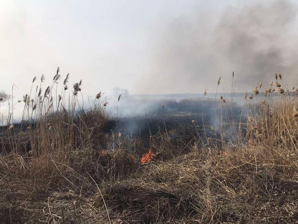 За сутки спасатели потушили 7 пожаров в экосистемах и хозпостройку (ФОТО) 1