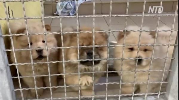 Почти как в кино: 101 щенка вырвали из рук контрабандистов в Германии (ВИДЕО)