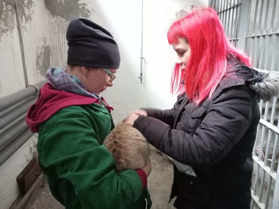 Ласковый и сердитая: в Николаевском зоопарке родились львята (ФОТО) 1