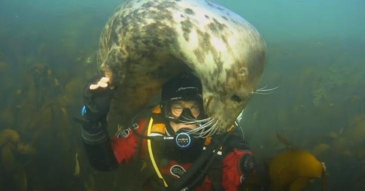 Как тюлени помогают расслабиться английскому врачу, который борется с коронавирусом (ВИДЕО)