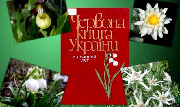 +52 растения: в Украине обновили Красную книгу