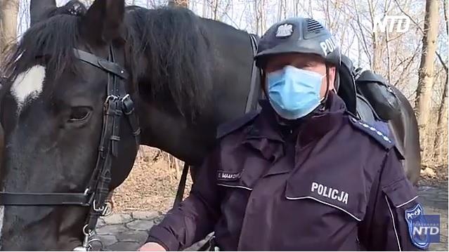Новый закон должен подарить служебным животным Польши счастливую старость (ВИДЕО)