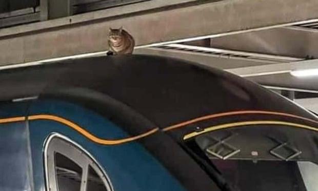 В Великобритании из-за кота задержали отправку поезда