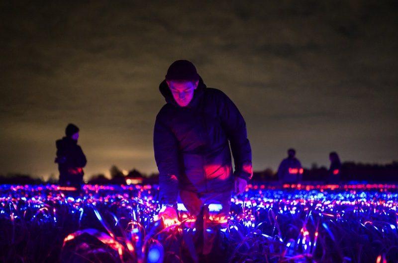 Красиво и полезно: нидерландский художник создал световую инсталляцию для овощей (ФОТО)