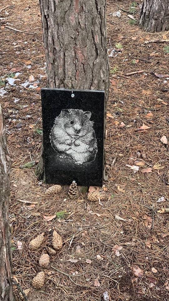 В Николаеве парк превращается в кладбище домашних животных (ФОТО) 5