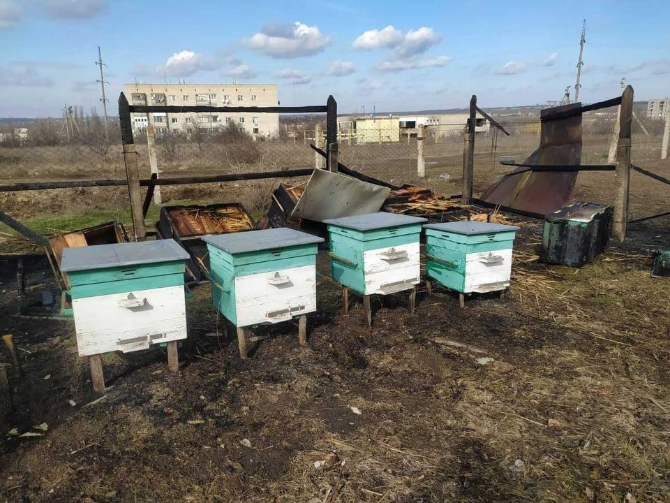 Пчел жалко. На Николаевщине неизвестные подожгли ульи (ФОТО) 3