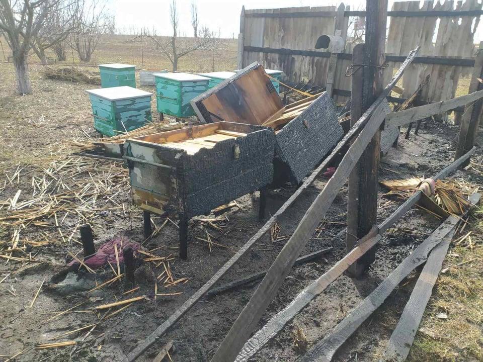 Пчел жалко. На Николаевщине неизвестные подожгли ульи (ФОТО) 5